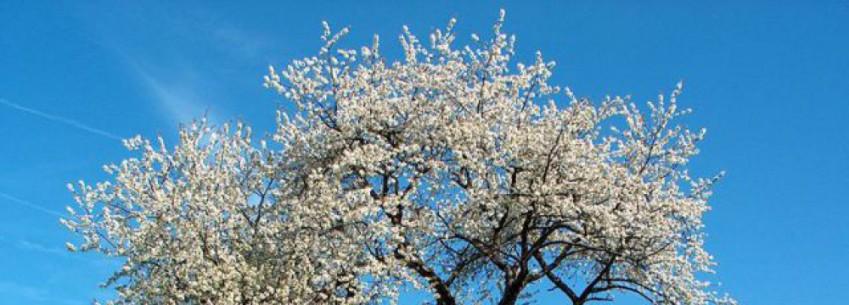 cropped-drzewo.jpg